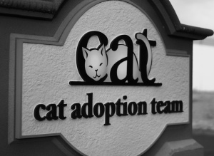 CAT Cat Adoption Team