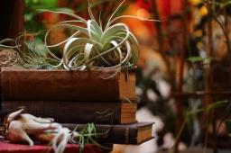 The Whole World is a Garden: Emerald Petals